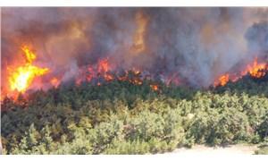 Gelibolu'da orman yangını: 300 hektara yakın alan yandı