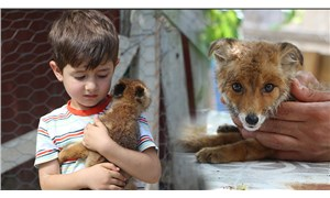 Yolda bulduğu bebek tilkiyi evinde misafir etti