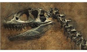 Madagaskar'da dinozorların atası olduğu düşünülen minyatür bir dinozor bulundu