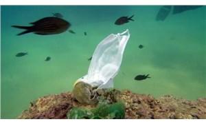 Deniz kirliliği alarm veriyor: 30 yıl sonra denizlerde balıklardan çok mikroplastik olacak