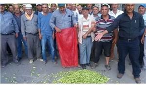 Bamya üreticilerine Aydın Büyükşehir Belediyesi'nden destek