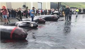 Faroe Adaları'nda balina ve yunus balığı katliamı festivali