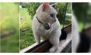 Bahçede yaşayan engelli kediyi silahla vurarak öldürdüler