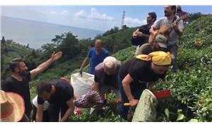 Fındıklı'da sanatçılar 'meci' usulü çay topladı