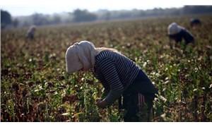 Tütün üreticisi karaborsacılara mahkûm edildi