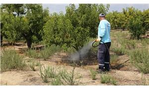 Tarım Bakanı'ndan tuhaf açıklama: Akdeniz sineği zarar vermemiş