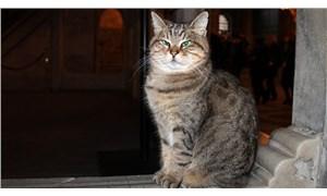 Ayasofya'nın kedisi Gli için çağrı: Kalbi eskisi kadar kuvvetli değil