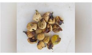 Hasatı başlayan incirde üretici tepkili: Jeotermaller inciri bitirdi!