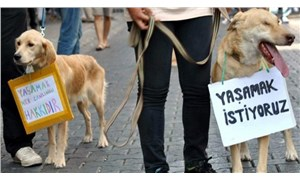 Beşiktaş'ta bir kişi, köpeğe çarpıp kaçtı