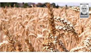 Türkiye tarımında yol ayrımı ve karar zamanı
