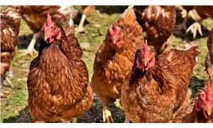 Çin: Brezilya'dan ithal edilen tavuk kanadının koronavirüs testi pozitif çıktı