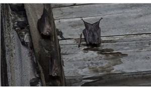 Yarasaların yuva yaptığı binada koronavirüs paniği