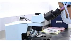 İnsan organlarında ilk defa mikroplastik ve nanoplastik partiküller bulundu