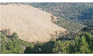Karaburun'da 'Güneş Enerji Santralı' için ağaç katliamına tepki