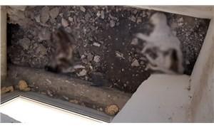 Hacettepe Üniversitesinde beton dökülen alanda kalan 3 kedi yaşamını yitirdi