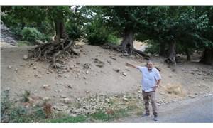 Dersim'de '500 yıllık dut ağaçları tescil edilsin' talebi
