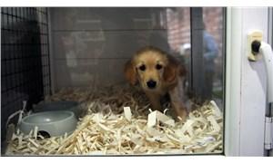 Beşiktaş Belediyesi evcil hayvan ticaretini yasaklıyor