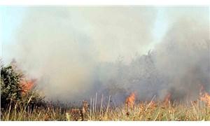 Kızılırmak Deltası Kuş Cenneti'nde çıkan yangın kontrol altına alındı
