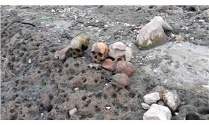 Çanakkale'de bir köyde 4 kafatası bulundu