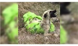 Çuvala koyularak ölüme terk edilen köpek kurtarıldı