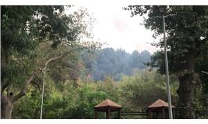 Beykoz'daki ormanlık alanda çıkan yangın kontrol altına alındı