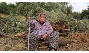 50 yıllık ağaçlar katledildi
