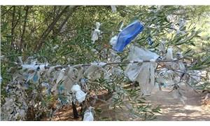 Dilek ağaçları tıbbi maskeyle doldu