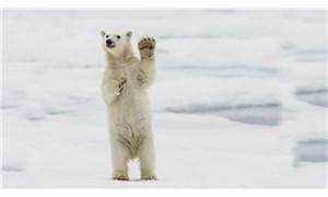 Kanada'da askeri helikoptere kutup ayısı saldırdı