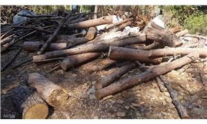 Çimento fabrikası kapasite artırımı yaklaşık 400 bin ağacı tehdit ediyor!