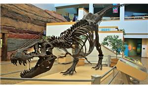 67 milyon yıllık dinozor iskeleti 27,5 milyon dolara satıldı