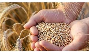 ABB'den çiftçiye destek: 250 bin dönümde buğday üretilecek
