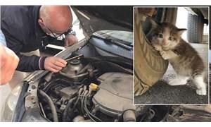 Yavru kediyi motordan çıkarmak için köpek sesi dinlettiler: Başka aracın motoruna kaçtı