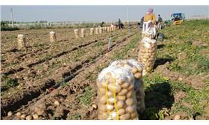 Yeni Şafak yazarından iktidara tarım eleştirisi: Bakan vebal altında