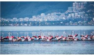 İzmir Körfezi'nde yaşam zenginleşiyor