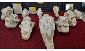 Adnan Oktar'ın evlerinden 10 milyon dolarlık fosiller çıktı