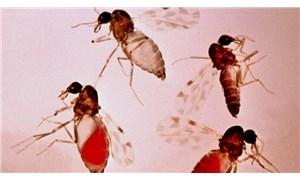Adana'da 'kör eden' sinek tehlikesi: 'Belediyelerimizi mücadeleye davet ediyorum'