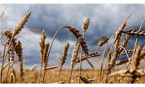 Buğday ithalatı makarna ihracatı için mi yapılıyor?
