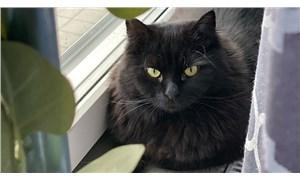 27 Ekim Dünya Kara Kediler Günü: Daha az sahipleniliyorlar