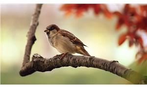 """Araştırma: Kuşlar hiç de öyle sanıldığı gibi """"kuş beyinli"""" değil"""