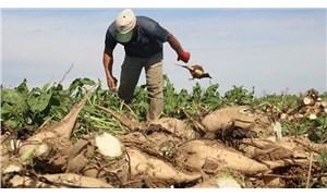 Maliyet artışı yüzde 50, fiyat artışı yüzde 11: Şeker pancarının taban fiyatı beklentilerin çok altında