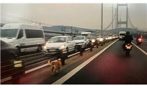 Köprüye giren köpek, motorcuların desteğiyle karşıya geçmeyi başardı