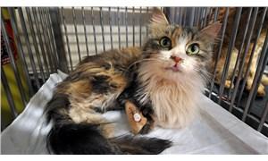 Rıza Bey Apartmanı'nın enkazından çıkarılan kediler tedaviye alındı