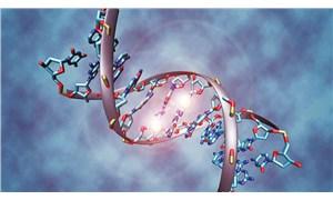 Genlerin işlevsel düzenlemesinin milyonlarca yıllık geçmişi