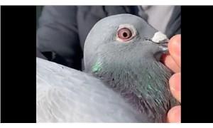 Posta güvercini 1,6 milyon avroya satıldı