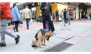 Mazgal köpeğin neyi beklediği ortaya çıktı
