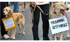 Hayvan hakları yasasının Meclis'e gelmesi için ne olması lazım?