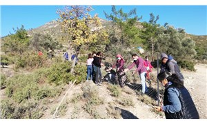 Jeotermale karşı fidan dikerek tarlalarını koruyorlar