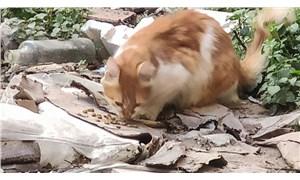 Eyüpsultan'da 4'ü yavru 7 kedi vahşice öldürüldü!