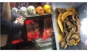 İstanbul'da 15 boa ve piton yılanı ile 1 sakallı ejder bulundu