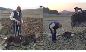 Mersin'de bataklığa saplanan yaralı eşek kurtarıldı